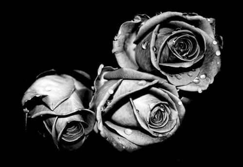 Gravure rozenknoppen