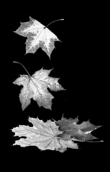 Gravure vallende bladeren