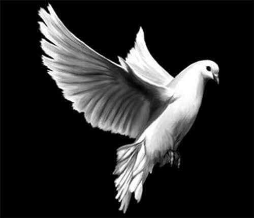 Gravure duif